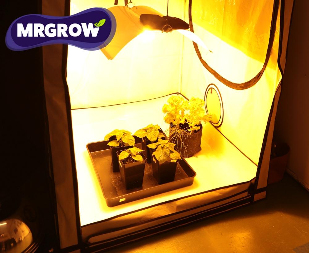 growbox do uprawy roślin